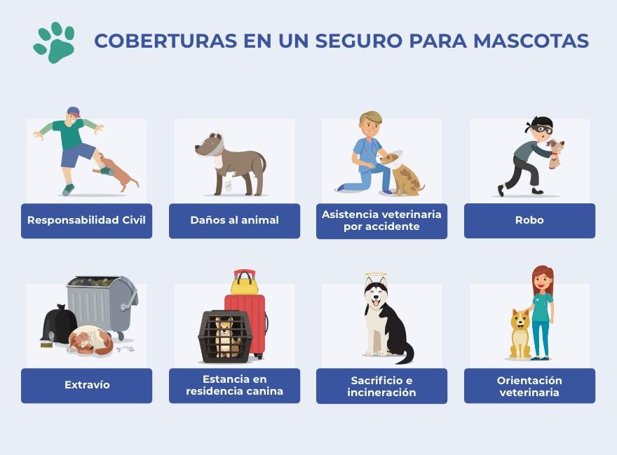 Protege a tu gato con un seguro de mascotas